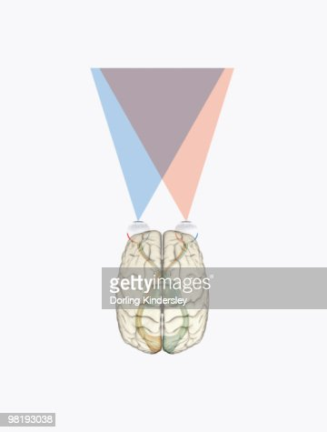 Digital Illustration Of Human Brain And Information From ...