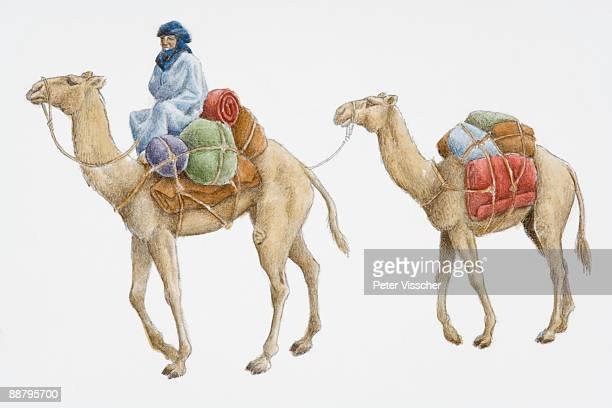 digital illustration of kushite man sitting on camel carrying merchandise, 300 bc - north african ethnicity stock illustrations, clip art, cartoons, & icons