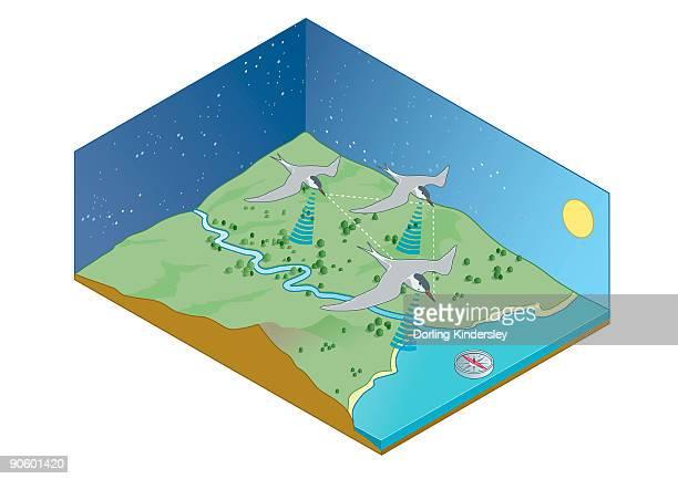 ilustraciones, imágenes clip art, dibujos animados e iconos de stock de digital illustration of migration navigation of birds including the sun, stars, coastlines, earthã�s  - animal vertebrado