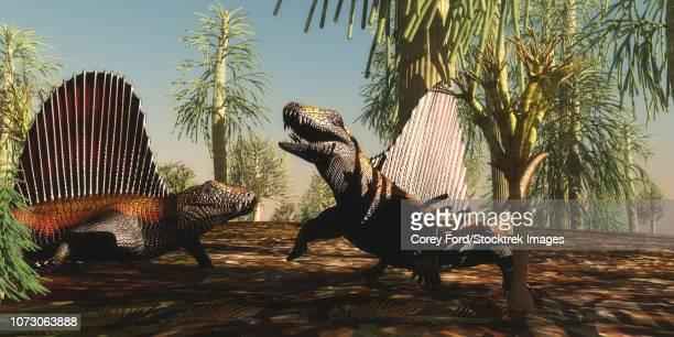 ilustraciones, imágenes clip art, dibujos animados e iconos de stock de dimetrodon reptiles in a territorial dispute during the permian period. - triásico