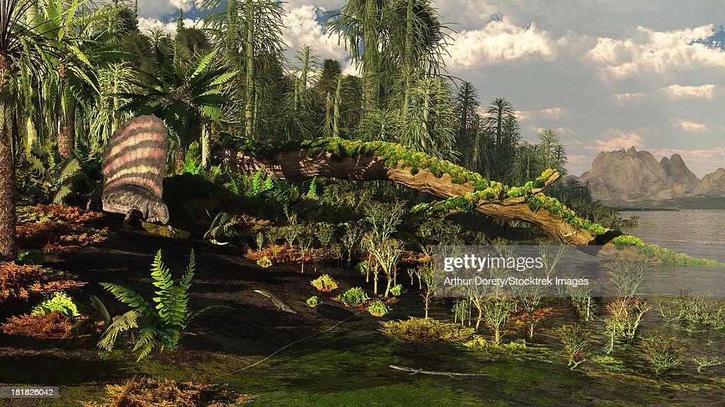 A Dimetrodon roams the Mid-Permian Period, circa 250 million years ago. : stock illustration