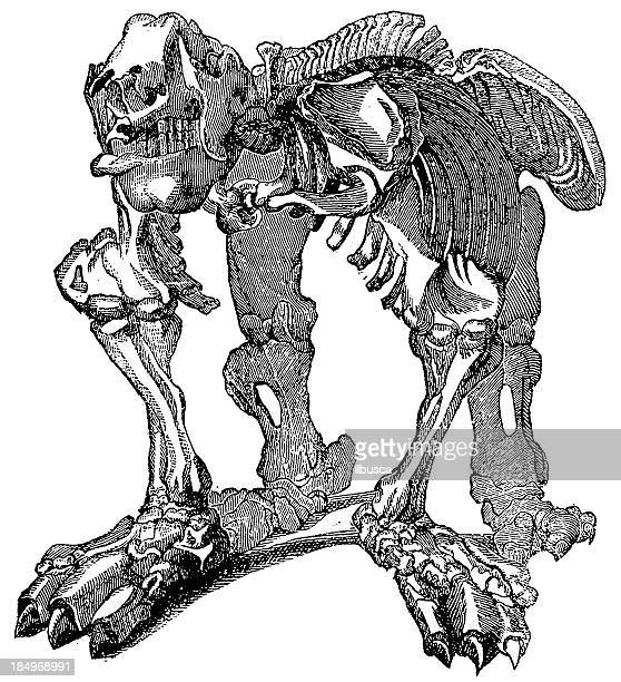 ilustraciones, imágenes clip art, dibujos animados e iconos de stock de dinosaur esqueleto - paleolitico