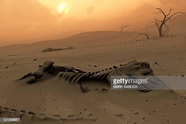 dinosaur skeletons in the desert - animal skeleton stock illustrations, clip art, cartoons, & icons