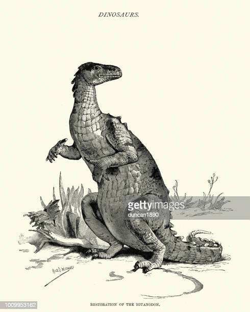dinosaurs, restoration of a iguanodon - palaeontology stock illustrations