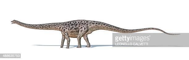 Illustrations et dessins anim s de diplodocus getty images - Dessin diplodocus ...
