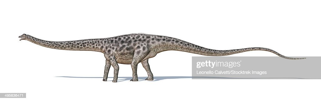Diplodocus dinosaur on white background with drop shadow. : stock illustration