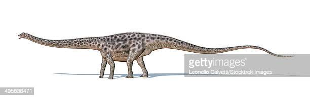 Diplodocus dinosaur on white background with drop shadow.
