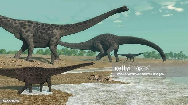 Diplodocus dinosaurs looking for water.
