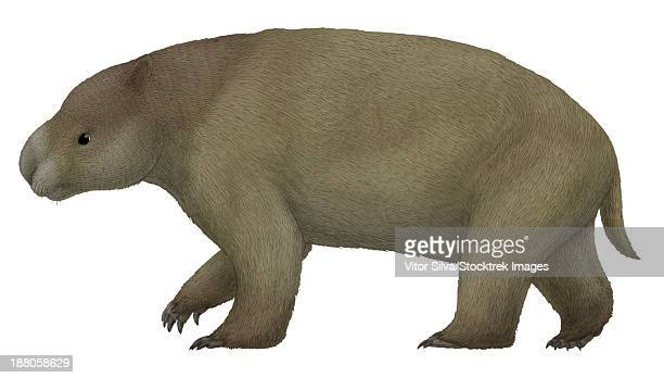 Diprotodon, the largest know marsupial from the Pleistocene of Australia.