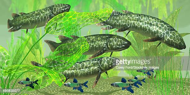 ilustraciones, imágenes clip art, dibujos animados e iconos de stock de dipterus is an extinct freshwater lungfish from the devonian period of australia and europe. - biodiversidad