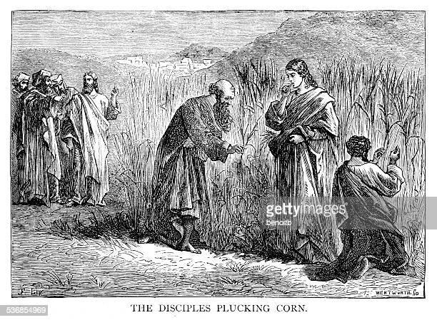 disciples plucking corn - zea stock illustrations, clip art, cartoons, & icons