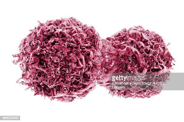 dividing cancer cells, illustration - tumor stock illustrations