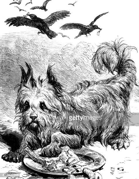 dog eating and the hungry crows above him on sky - dog eating stock illustrations, clip art, cartoons, & icons