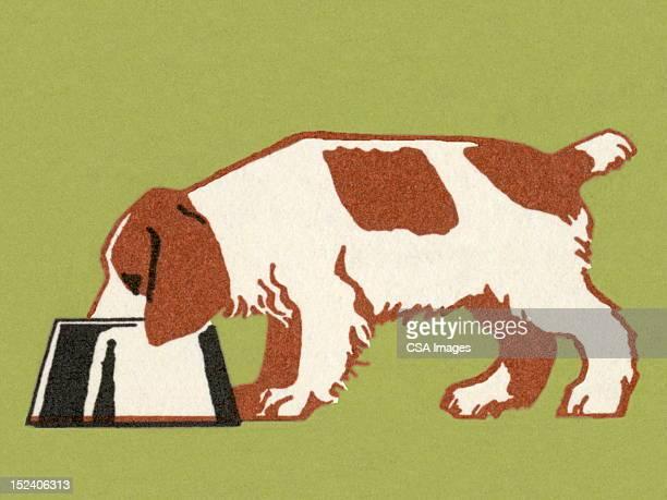 dog eating - dog eating stock illustrations, clip art, cartoons, & icons