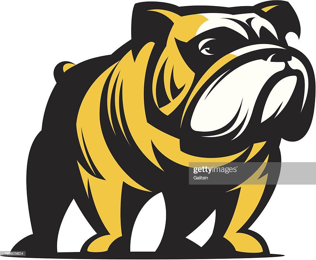 Dog English Bulldog