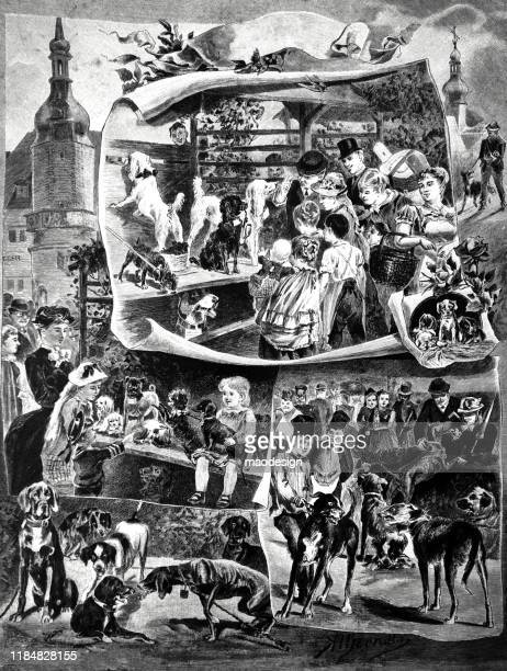 dog exhibition loved by families - 1887 stock illustrations, clip art, cartoons, & icons