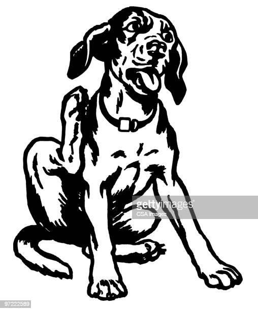 ilustraciones, imágenes clip art, dibujos animados e iconos de stock de dog - enfermedad de la piel