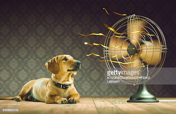dog next to electric fan, illustration - electric fan stock illustrations