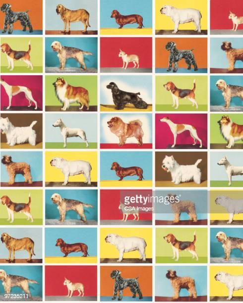 dog pattern - image stock illustrations