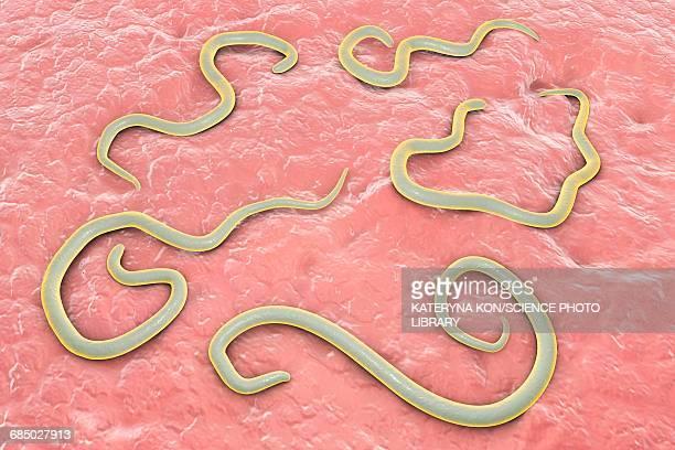 dog roundworm, illustration - infestation stock illustrations, clip art, cartoons, & icons