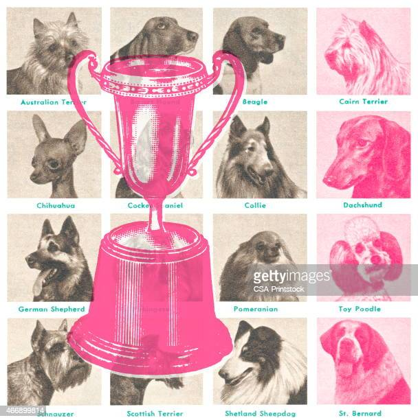 dog show trophy - best in show stock illustrations