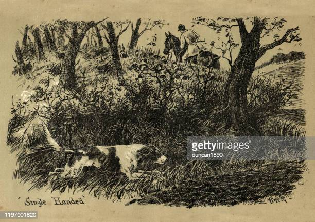 dog single handed flushing out the fox, victorian, 19th century - animals hunting stock illustrations