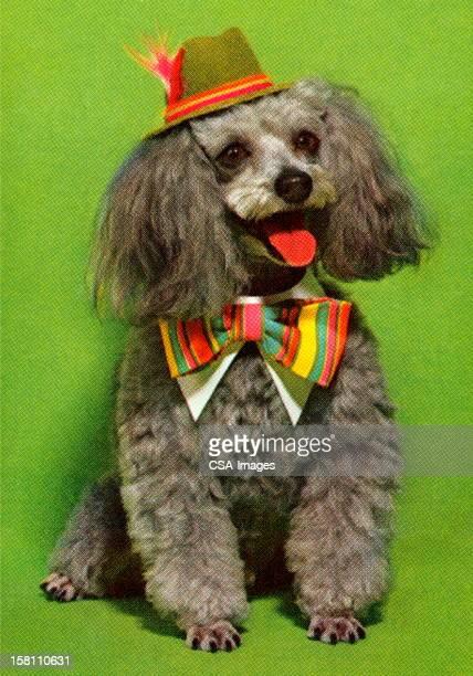 犬を着ている帽子とボウタイ