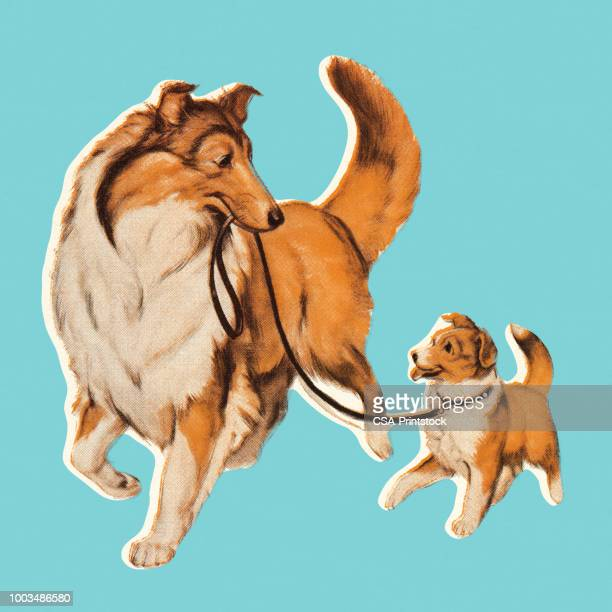 dog with puppy on leash - two animals stock illustrations
