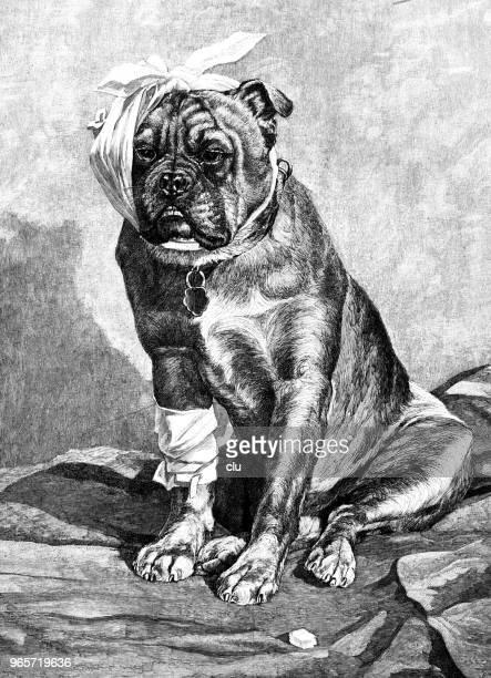 ilustraciones, imágenes clip art, dibujos animados e iconos de stock de perro con dolor de muelas - dolor de muelas