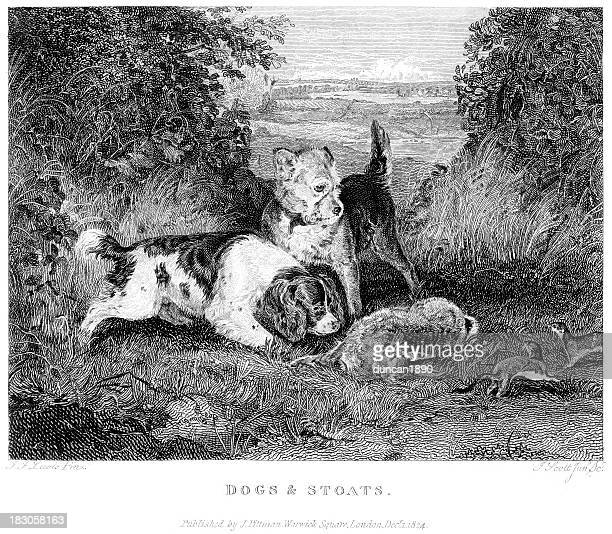 Dogs and Stoats