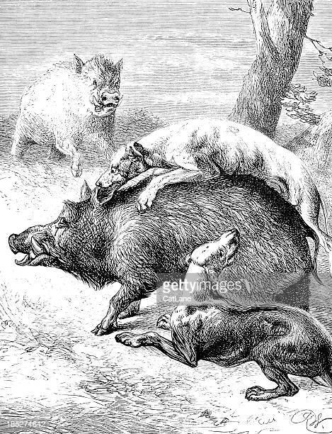 Perros ataca a los jabalíes, Victorian medio