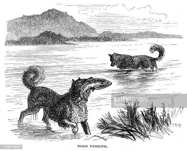 Dogs fishing engraving 1868