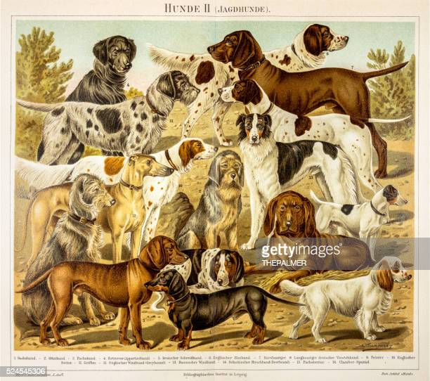 dogs for hunting engraving 1895 - lithograph stock illustrations