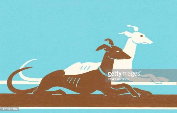 ilustraciones, imágenes clip art, dibujos animados e iconos de stock de los perros - galgo