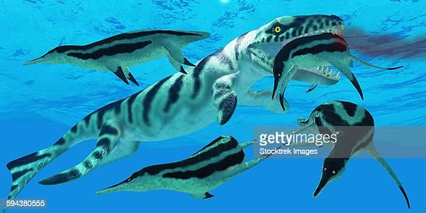 ilustraciones, imágenes clip art, dibujos animados e iconos de stock de dolichorhynchops plesiosaurs try to evade a dakosaurus marine reptile. - plesiosaurio
