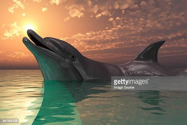 dolphin  - sunset stock illustrations