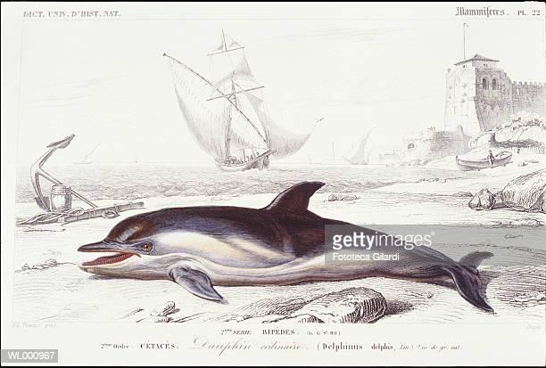 ilustrações, clipart, desenhos animados e ícones de dolphin on beach - organismo aquático