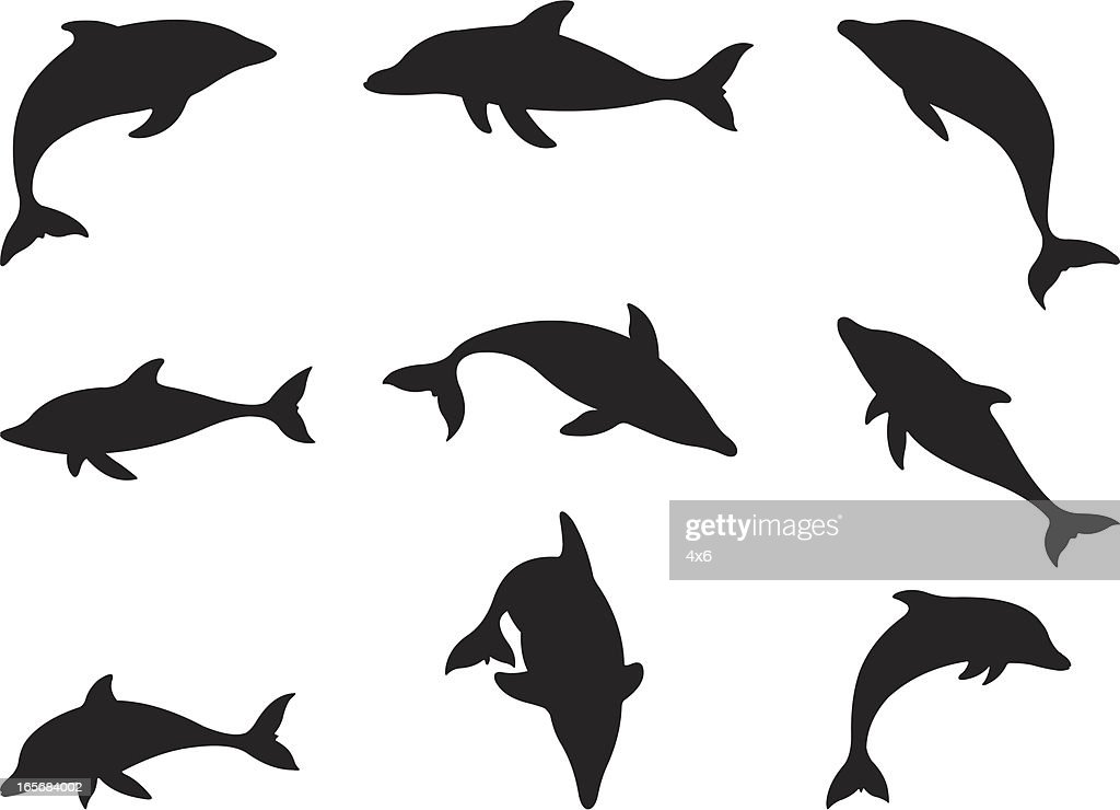 Dolphins in action