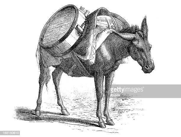 ilustraciones, imágenes clip art, dibujos animados e iconos de stock de burro transporte de agua - mula