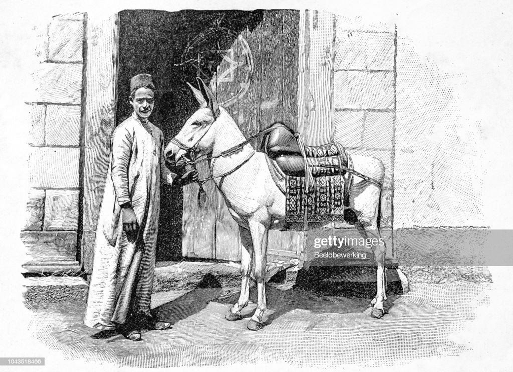 donkey driver with his  white donkey illustration 1895 'the Earth and her People' : stock illustration