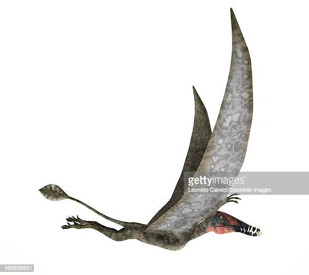 ilustraciones, imágenes clip art, dibujos animados e iconos de stock de dorygnathus flying dinosaur on white background. - paleobiología