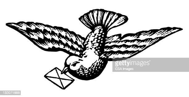 Dove Holding Letter