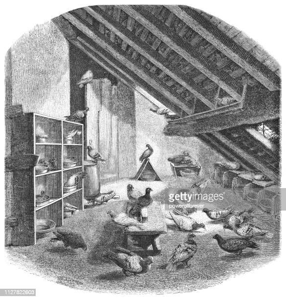 Dovecote for Carrier Pigeons in Paris, France - 19th Century