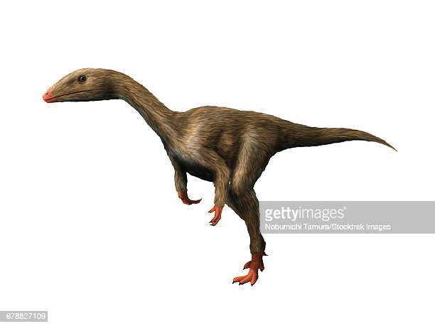 Dracoraptor hanigani is a carnivorous theropod from the Early Jurassic period.