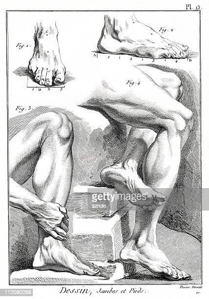 ilustrações, clipart, desenhos animados e ícones de desenho - perna humana