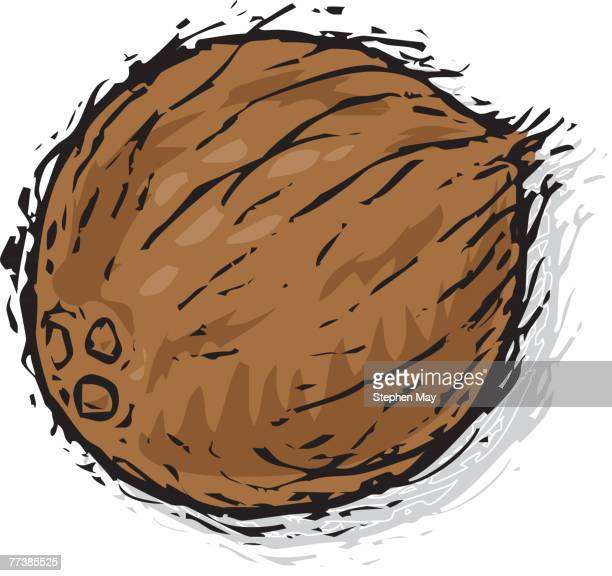 a drawing of a coconut - husk stock illustrations, clip art, cartoons, & icons