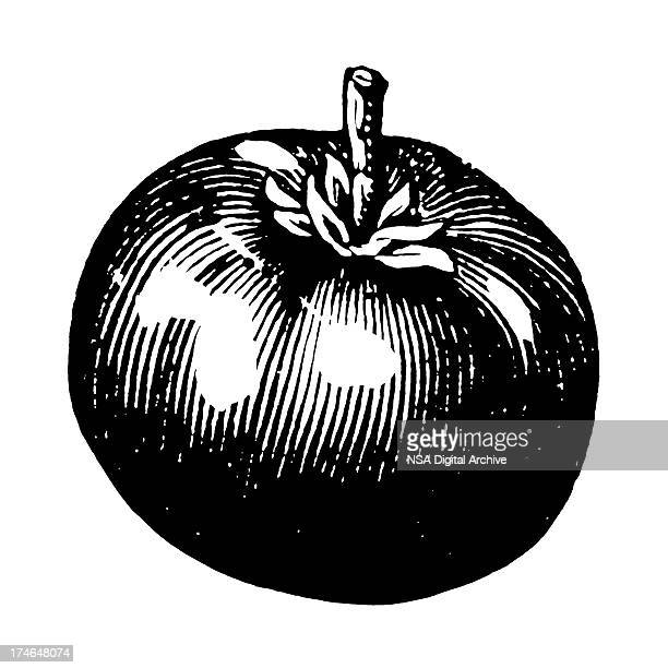 a drawing of a tomato in black and white - black and white food stock illustrations