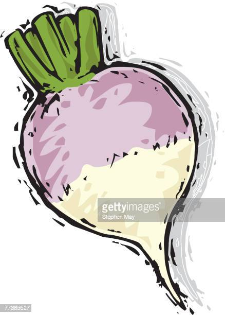 a drawing of a turnip - turnip stock illustrations, clip art, cartoons, & icons