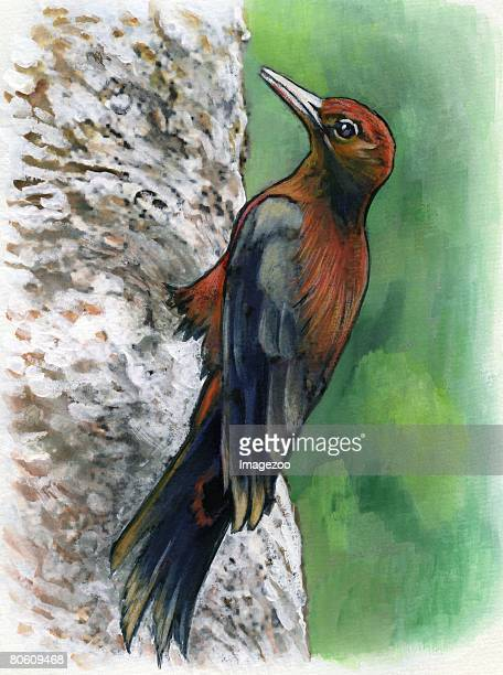 a drawing of an okinawa woodpecker - okinawa prefecture stock illustrations, clip art, cartoons, & icons