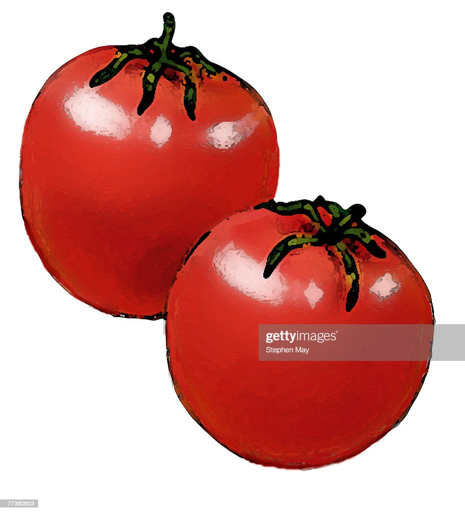 Drawing of two red juicy tomatoes with a white backdrop : Ilustração